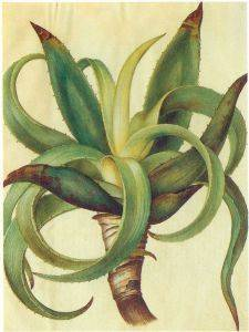 Aloe vera como remedio casero para curar el herpes facial